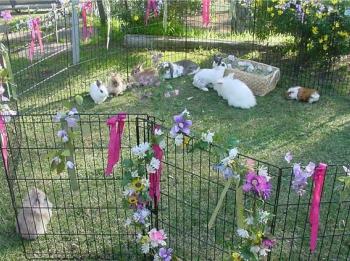 bunny_zoo
