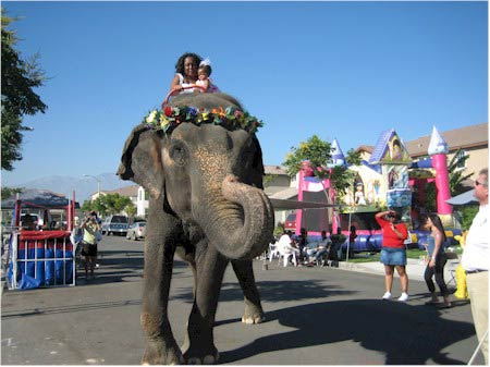 Elephant and Camel rides – $3500 – $5200 3hrs
