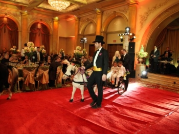 pony-carriage-w-coat-tails-glendale-christening-2