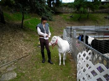 tangled-pony-rides