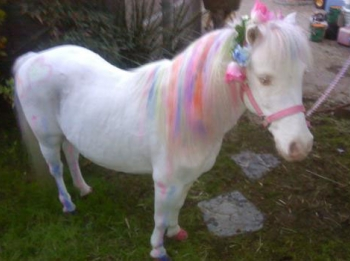 pony-dress-up-party-4