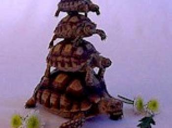 turtlestack
